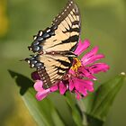 Monarchs Love Zinnias by GardenJoy