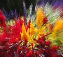 colour!!! by Iris Mackenzie