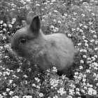 Bunny in Black &amp; White by Michael John