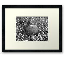 Bunny in Black & White Framed Print