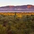 Misty Rock Morning At Sunrise Viewing by Wayne Harris