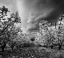 White Autumn by Gustav Snyman
