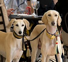 Two  saluki by sandyprints
