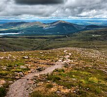 Glenmore, Cairngorms, Scotland. by David Lewins
