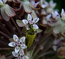 My First Bug Capture ! by Elfriede Fulda