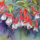 Fuchsia ' Gordon Thorley' by Patricia Sabin