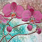 Orchid, Rain on Windows by Patricia Sabin