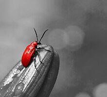 Bug A Boo by Denise Abé