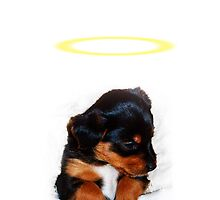 A descending halo, over a puppy  by Mark Johnson