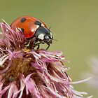Ladybug by Val Saxby