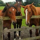 Three Horses come to say HI! by Michaela1991