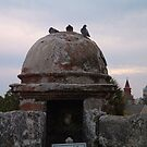 pigeon roost-The Castillo St Augustine, Florida by kathyrussell56
