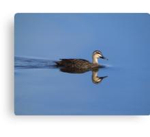 ~ Pacific Black Duck ~ Canvas Print