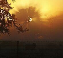Sunrise through Winter Fog by Julie Sleeman