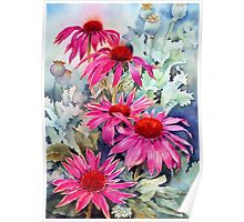 Echinaceas and poppy seed heads Poster