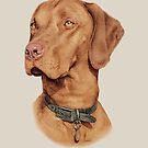 Hungarian Vizsla by StephDix