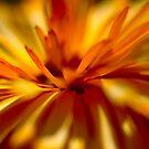 Feathery Petal by Paul Revans