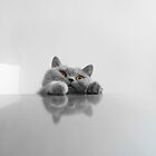 Cute Peeking Cat by ksegev