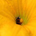 Squash Blossom Bee by nrsedude