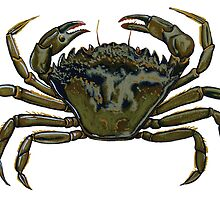 Shore crab by cnillustration