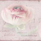 Ranunculus Single by JulieLegg