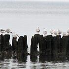Flock by Mikhail Krupenin