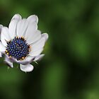Blue flower by CoffeeBreak