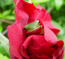 Frog In Coastal Garden Rose - Atlantic Beach, Florida by ShannonRussell