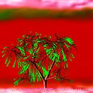 Green Tree against Red Background by emorelle