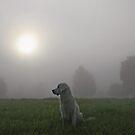 Foggy morning by Trine