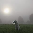 Foggy morning by Trine