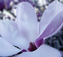 The Magnolia Tree by waxyfrog