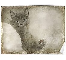 Kitty Art Poster