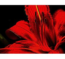 Red ! Photographic Print