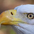Eagle Eye by naturalnomad
