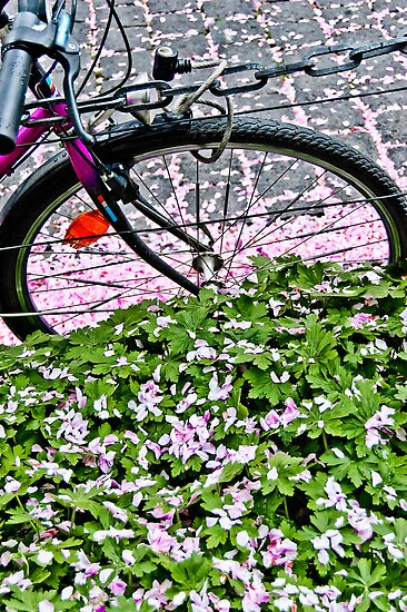 Biking through petals in Bonn by RecipeTaster
