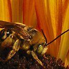 Bee nice by aprilann
