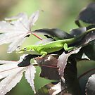 Only Native Green Anole to the USA by JeffeeArt4u