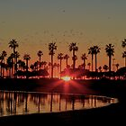 Mission Bay Sunset Reflection by Brian HMUROVICH