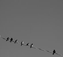 On The Wire by Rhonda Blais