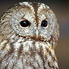 Young Brown Owl by Gregory L. Nance
