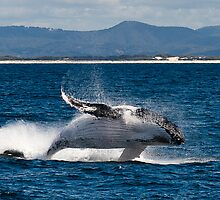 Humpback by D Byrne