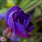 morning dew by Helenvandy