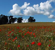 Suffolk Poppies by wiggyofipswich