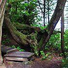 A Walk in the Forest by Brenda Boisvert