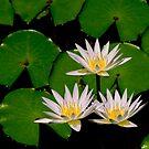 3 lillies by leoaloha
