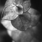 Darkroom Print 7 by BKSPicture