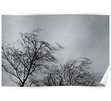 Trees Blowing In The Wind Poster