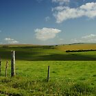 Fence And Cattle by glynk