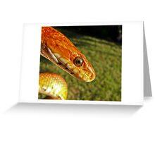 Fluffy - corn snake Greeting Card